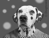 Spots and Stripes, large original photograph of a Dalmatian Dog Wearing a Vintage Striped Dress
