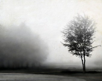 "Black and white landscape photo winter fog nature neutral minimalism modern trees - ""Grey"" 8 x 10"