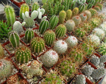 12 Succulents And Cactus Plants, Party Favors, Make a Terrarium, Dish Garden, Centerpiece And More