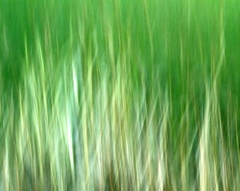 Green Grass, White, Abstract Nature Photography, Summer Color, 11X14 Mat, Modern Wall Art, Wall Hanging, Ready to Frame