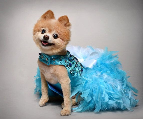 Small Dog harness Dress Blue