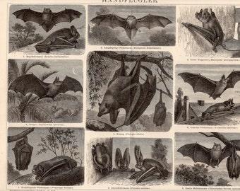 1894 ANTIQUE BAT LITHOGRAPH flying bats scene original antique print for halloween fabulous scary bats - handflugler
