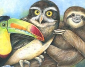 Toucan, Owl, Sloth Rainforest Animals Colored Pencil