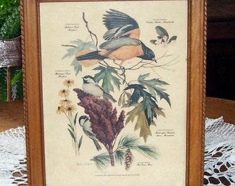 Arthur Singer Golden Yellow Male Oriole Framed Print,  Black Capped Chickadee, Black eyed Susan, , Wall Hanging, Decor,Male Bird, P