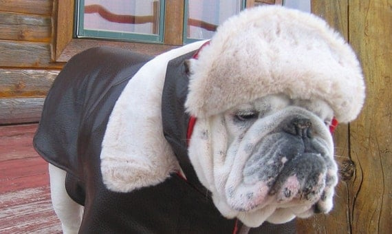 Order AVIATOR English Bulldog Coat + Hat Reversible Custom Pattern