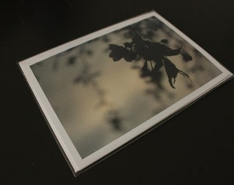 "Blank Photo Greeting Card, 7"" x 5"", 'Weepy Blossoms'"