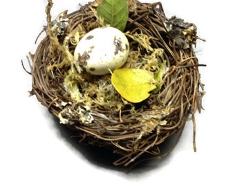 Real Bird Egg in Nest