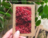 Notebook 40 Red Autumn - Small Pocket Size - Mini Journal for Travel, for your Inspiration