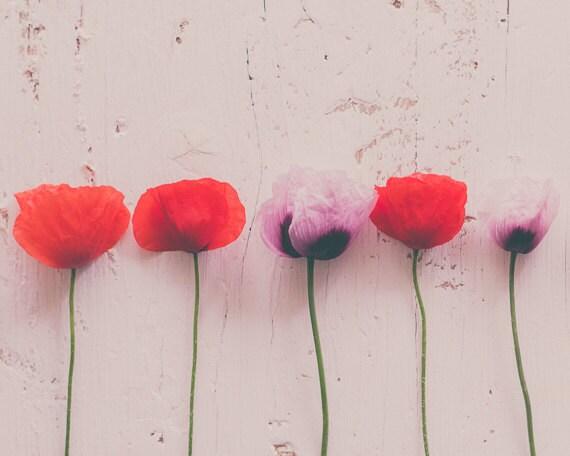 Red Poppy Wall Decor : Red poppy photo print wall decor pastel