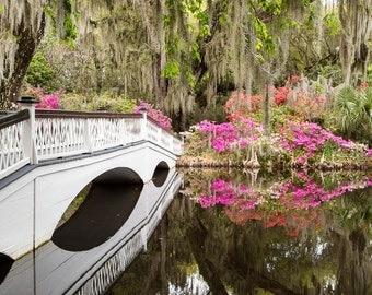 Charleston Garden Photo - Azaleas and Spanish Moss