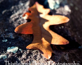 Fall Leaf - 5x7 Photographic print - color or black and white
