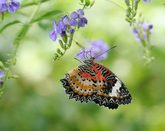 Summer Butterfly  (multiple sizes available)