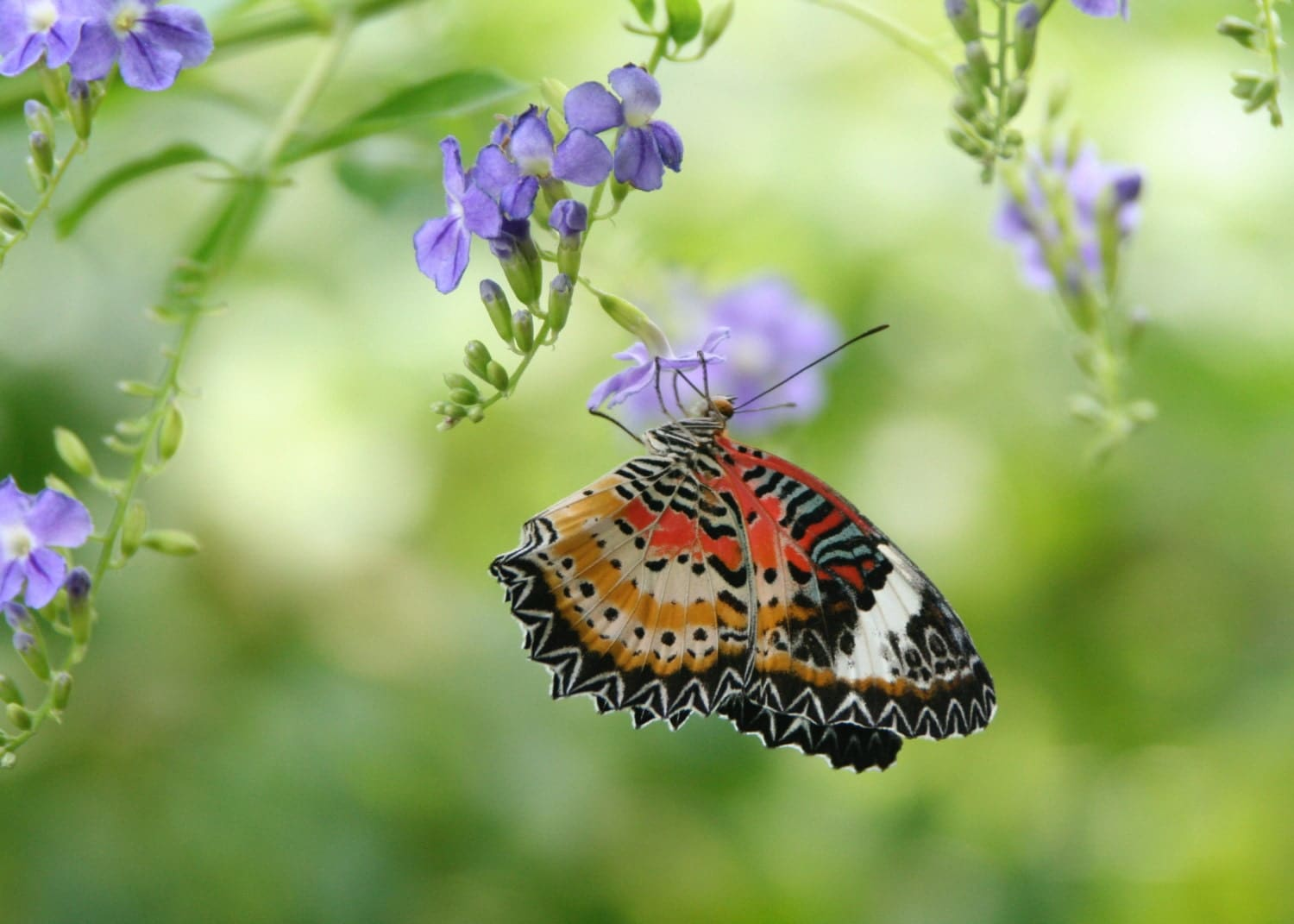 Summer Butterfly Multiple Sizes Available