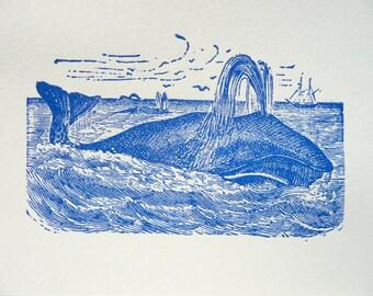 Spouting whale