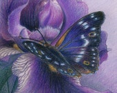 """Lesser Purple Emperor butterfly on a violet Iris flower - Art Reproduction (Print) - PURPLE in """"Camouflage (Secondary Colors)"""" Series"""