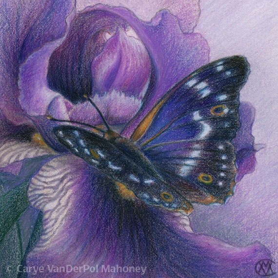 "Lesser Purple Emperor butterfly on a violet Iris flower - Art Reproduction (Print) - PURPLE in ""Camouflage (Secondary Colors)"" Series"