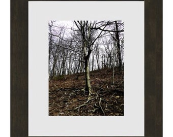 Tree (Matted and Framed 8x10 Color Photograph)