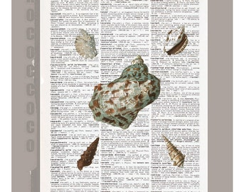 Sea SHELL1  -ARTWORK  printed on Repurposed Vintage Dictionary page 8 x 11 -Upcycled Book Print
