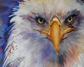Eagle Eyes, bald eagle painting, original watercolor