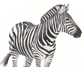 Zebra Painting  - Print of watercolor painting 2014 - 5 by 7 print