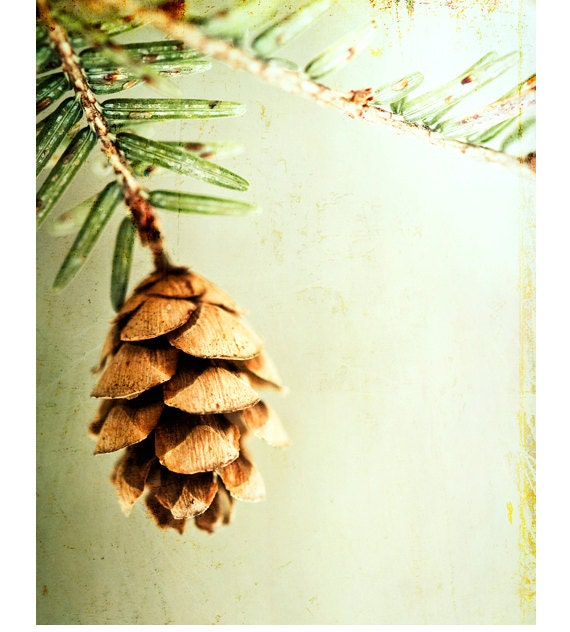 "Nature Photography, light green brown pinecone pine cone winter wall art print botanical picture, 11x14 Photograph, ""The Hush of Winter"""