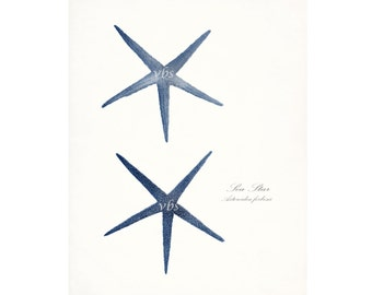 Two Coastal Decor Antique Sea Stars Giclee Art Print -  8x10 blue