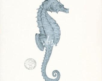 Coastal Decor  - Antique Sea Horse Nautical Art Print in French blue