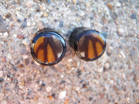 00G custom monarch plugs - black areng wood