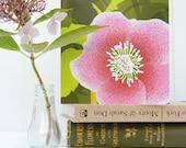 Hellebore Woodland Card - Christmas Rose, birthday, notelet