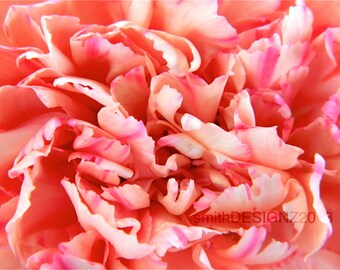Carnation, Flower Photography, Flower Texture, Home Decor, Vinyl Wall Decal, by Abby Smith