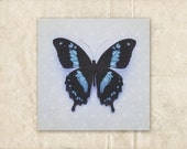 Butterfly Nursery Art, Blue Photography, Minimalist Photograph, Pastel Photo, Butterfly Picture, Square Artwork
