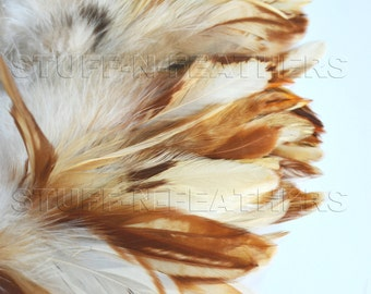 Natural rooster schlappen feathers - Cream w/ cinnamon, ivory beige brown feather for millinery, crafts / 4-6 in (10-15 cm) long / F53-4