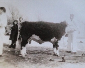 Original Antique Photograph The Milkman & The Cow
