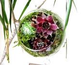 10 (TEN) Gorgeous Hanging 2 hook Terrarium- Great for Wedding Decorations / Favors