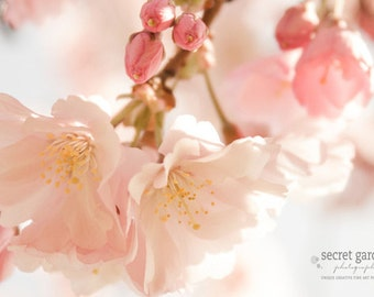 cherry blossom photo print - whimsical fine art photography, pink, pastel, colour, light, spring