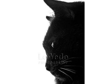 Black Velvet Cat Photo, Black and White, Animal Photography, Pretty Kitty, Cat Profile, Black Cat