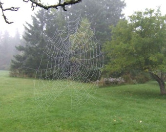 Spider web, Dew Drops