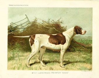 POINTER DOG ANTIQUE Chromolithograph Dog Print 1881 by Vero Shaw Cassells and Company Unique Christmas Thanksgiving dog lover gift
