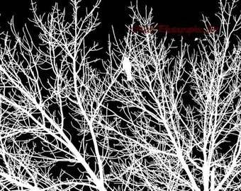 Modern Study of Black and White Contrast Tree With Bird Matted Picture Art Print A539