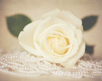 Femininity - Fine Art Rose Still Life Photo - Cream Ivory Rose and Pearls