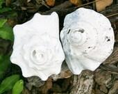 2 Gray White Shell Roses for Nautical Garden Decor (lot  425)