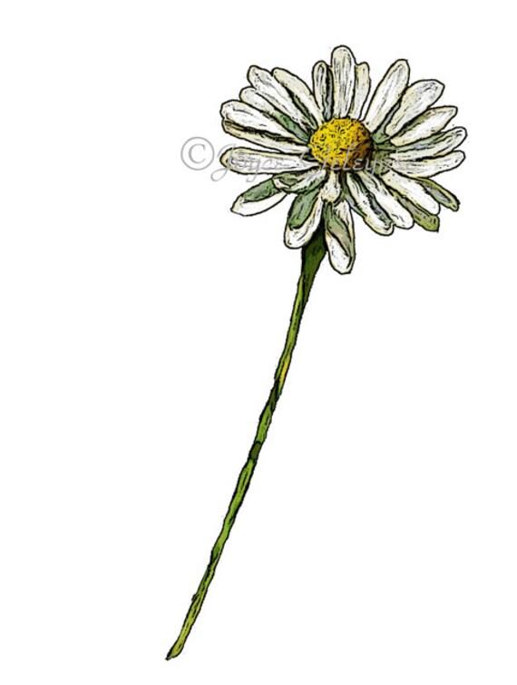 Daisy Clip Art Hand Drawn Clipart Drawing of Daisy Flower