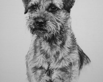 Border Terrier dog art dog print fine art Limited Edition print from an original charcoal drawing by H Irvine