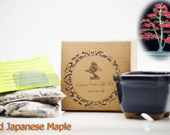 9GreenBox - Red Japanese Maple Bonsai Seed Kit- Gift - Complete Kit to Grow Red Japanese Maple Bonsai from Seed - FREE SHIPPING