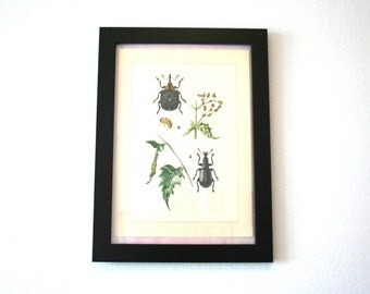 Vintage Educational Floral Botanical / Insect Print - horticultural encyclopedia 1950s