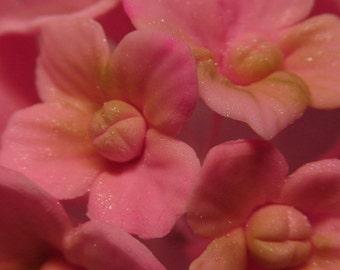 Pink Sugar Gumpaste Hydrangea Flowers