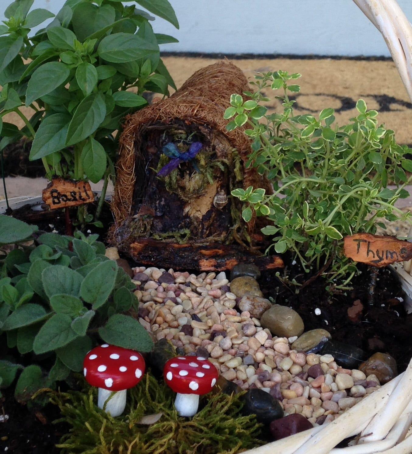 Basic container fairy garden kit - Fairy garden containers ...