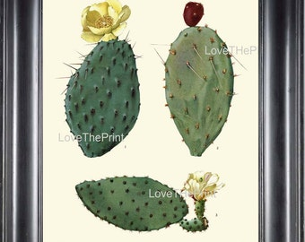 BOTANICAL PRINT CACTUS  Art Print 2 Beautiful Blooming Yellow White Red Flower and Fruit Tropical Garden Nature Home Office Wall Decor