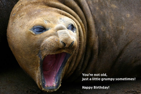 Humurous Birthday Card, Grumpy Seal, Antarctic Wildlife Photography