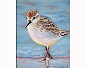 Sandpiper, Shore Bird Painting, Print WITH MAT INCLUDED